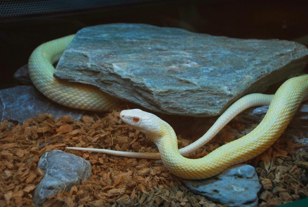 ヘビの床材おすすめ8選!ヤシガラ・アスペンなどの床材から交換の頻度とは