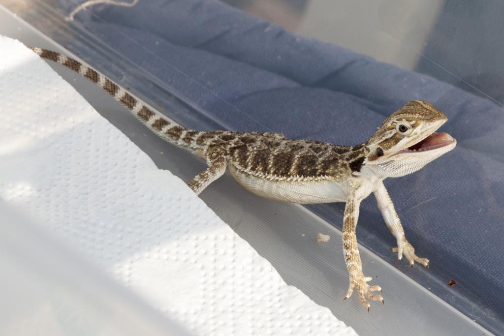 【初心者向き】爬虫類ケージの掃除方法!注意ポイントや除菌についても解説