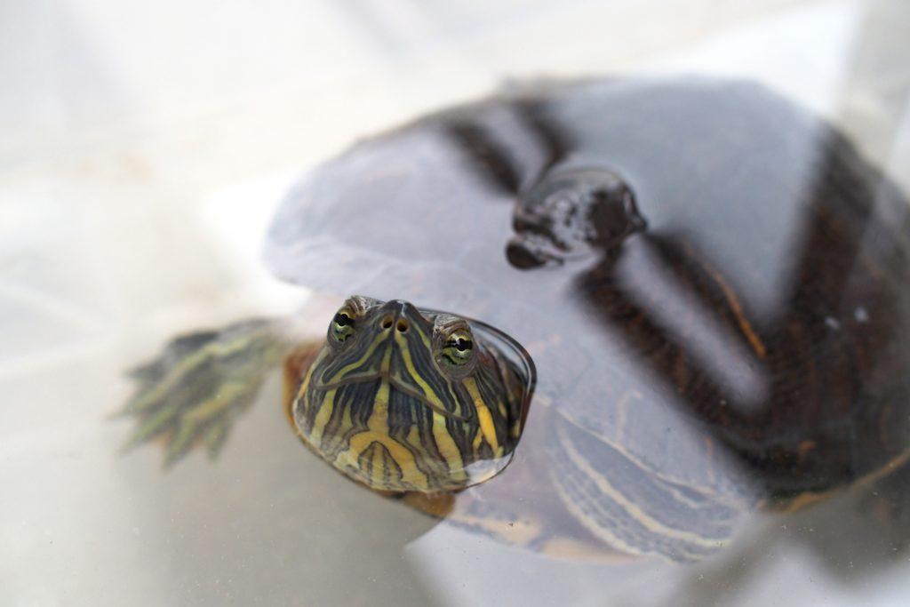 爬虫類ケージ・水槽の水垢がつく理由と落し方!ケージをきれいに保とう!