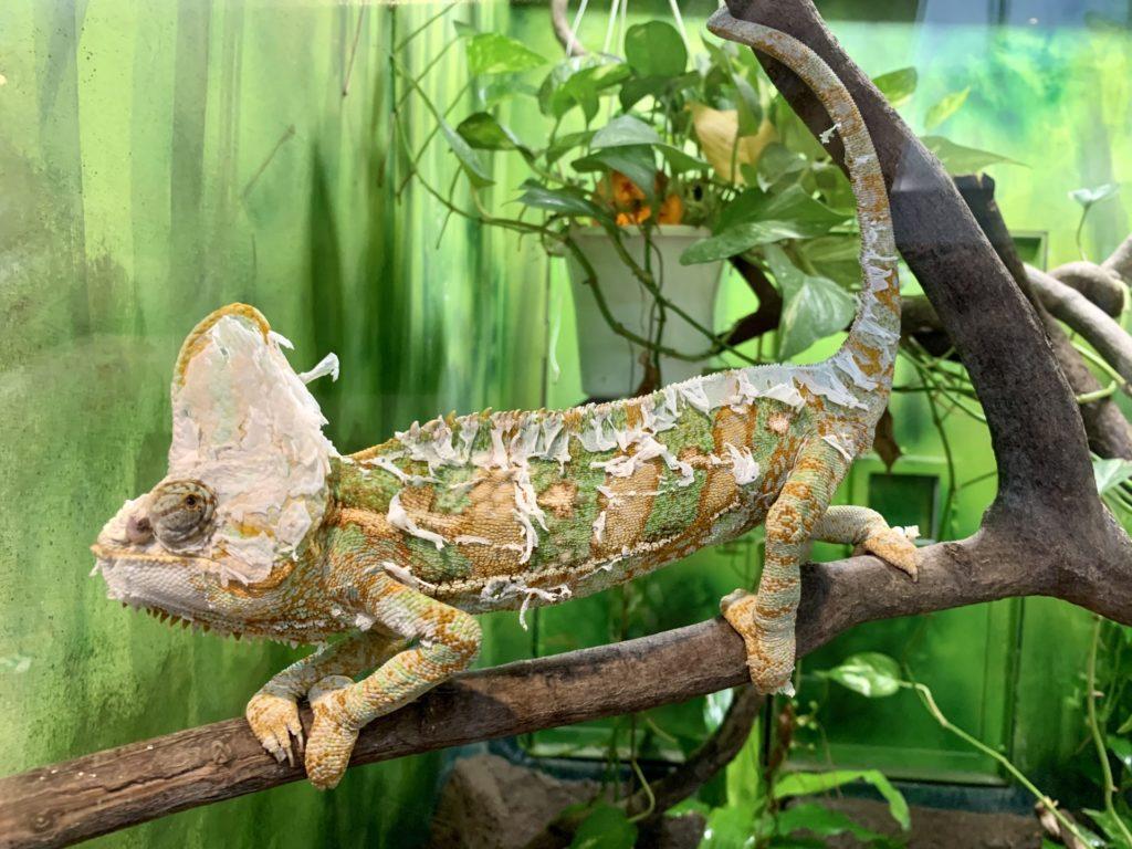 爬虫類ケージのレイアウトアイテム10選!流木・植物・石などをご紹介