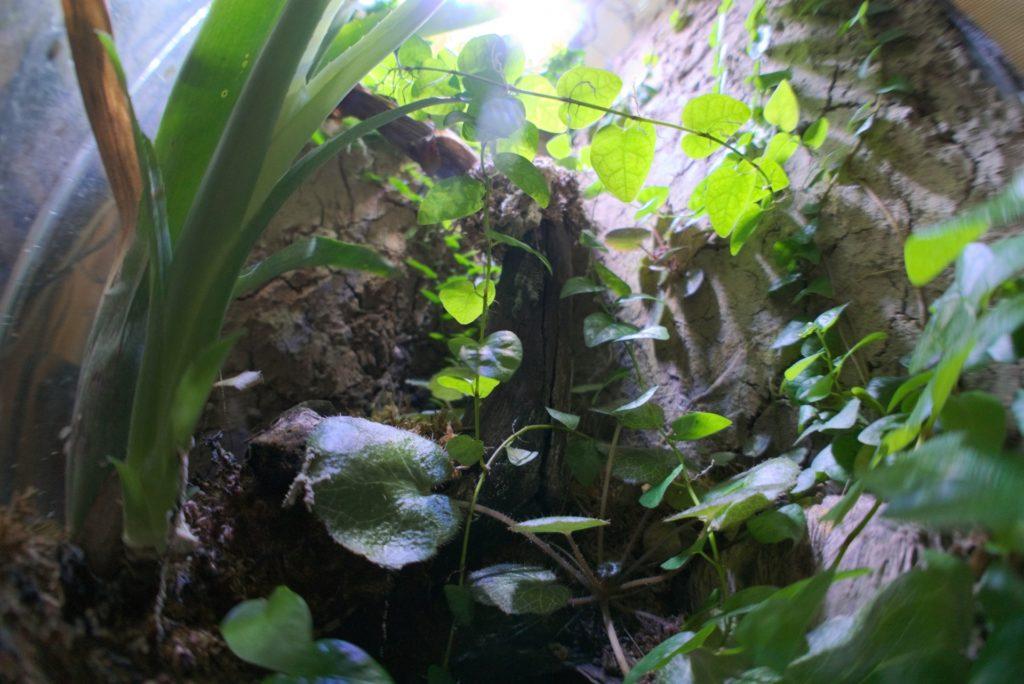 爬虫類と育てたい観葉植物5選!テラリウム・ビバリウムにおすすめの植物