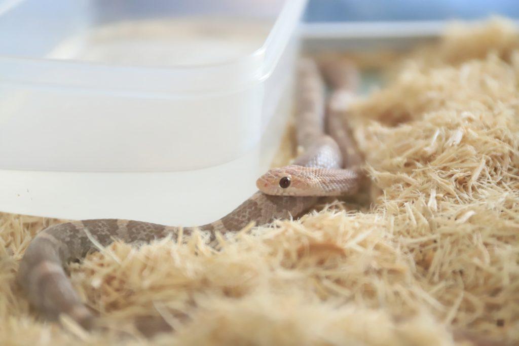 ヘビが水入れに入る!水浴びする理由とメリット・デメリットを解説します!