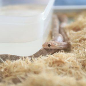 爬虫類用ヒーターについて!おすすめ商品10選・電気代・置き方の注意点
