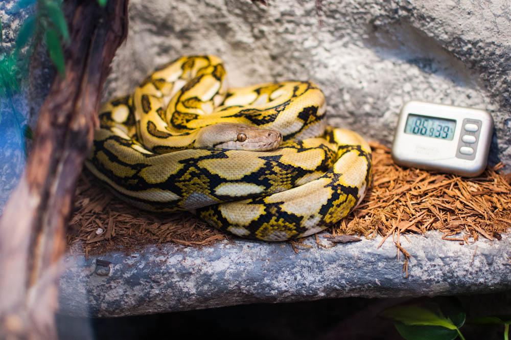 ヘビに最適な温度計・湿度計の選び方と設置場所!1ケージに何個必要?