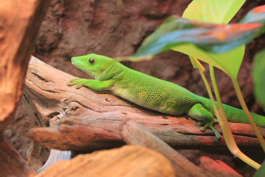 可愛い爬虫類10選!ランキングにできないくらい、かわいい種類をご紹介!